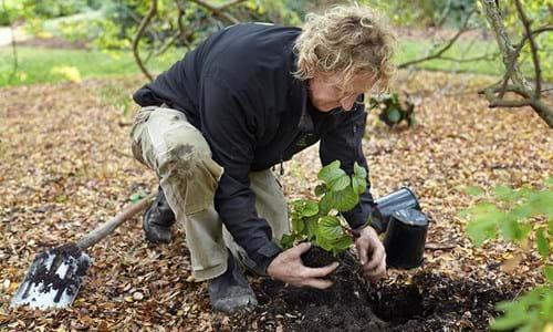 Garden maintenance horticulture van leeuwen green for Garden maintenance van